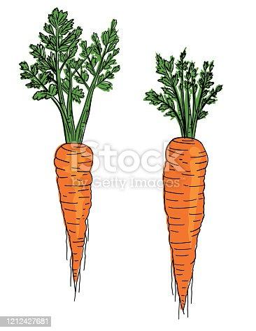 istock Hand Drawn Fresh Carrots 1212427681