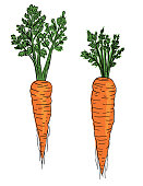 istock Hand Drawn Fresh Carrots 1212427681