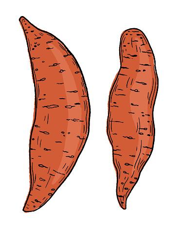 Hand Drawn Fresh Sweet Potatoes
