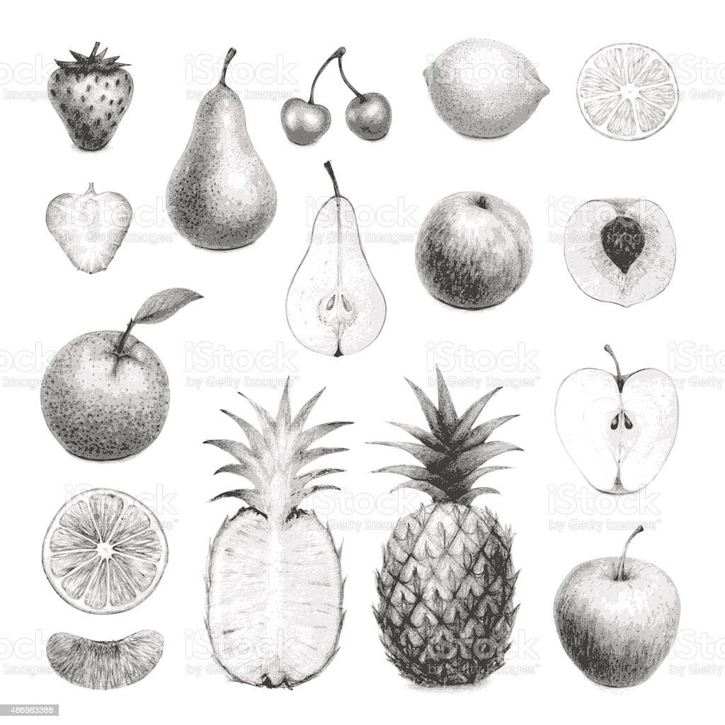 hand drawn fruits set vector art illustration