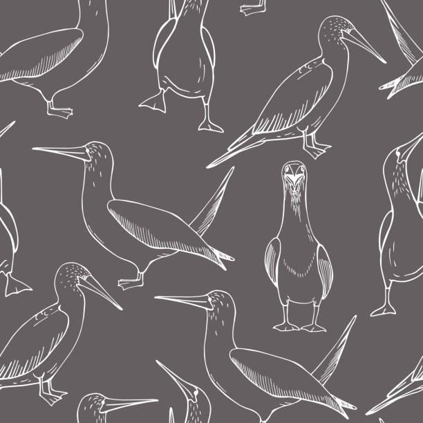 stockillustraties, clipart, cartoons en iconen met met de hand getekende gannet.  vectorpatroon - northern gannet