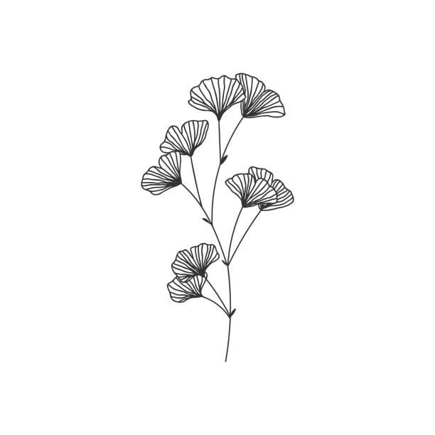 흰색 배경에 손으로 그린 은행나무 biloba 분기 그림 - 꽃 식물 stock illustrations