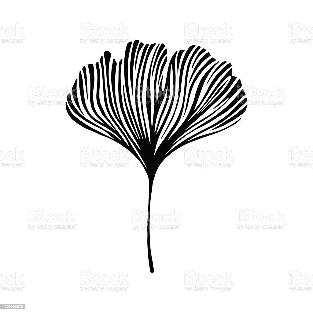 Hand drawn ginkgo leaf. Eco icon. vector art illustration