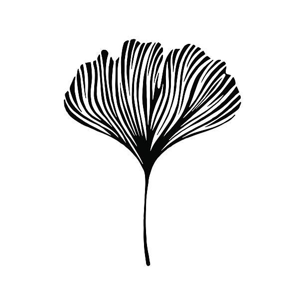 Hand drawn ginkgo leaf. Eco icon. Hand drawn ginkgo leaf. Eco icon. ginkgo stock illustrations