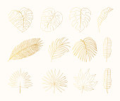 Hand drawn golden tropical rainforest leaves. Aralia, monstera, banana, palm leaf botanical gold leaf. Vector isolated illustration.