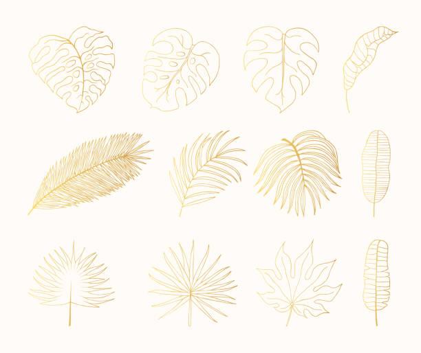ilustrações, clipart, desenhos animados e ícones de folhas de ouro floresta tropical de mão desenhada. arália, monstera, banana, folha palm botânica folha de ouro. ilustração em vetor isolado. - monstera