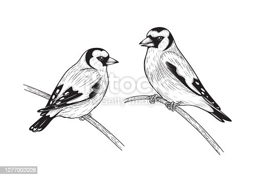 Hand drawn goldfinches isolated on blank background. Black and white couple of birds sitting on branches. Vector monochrome animalistic illustration with songbirds in vintage style.