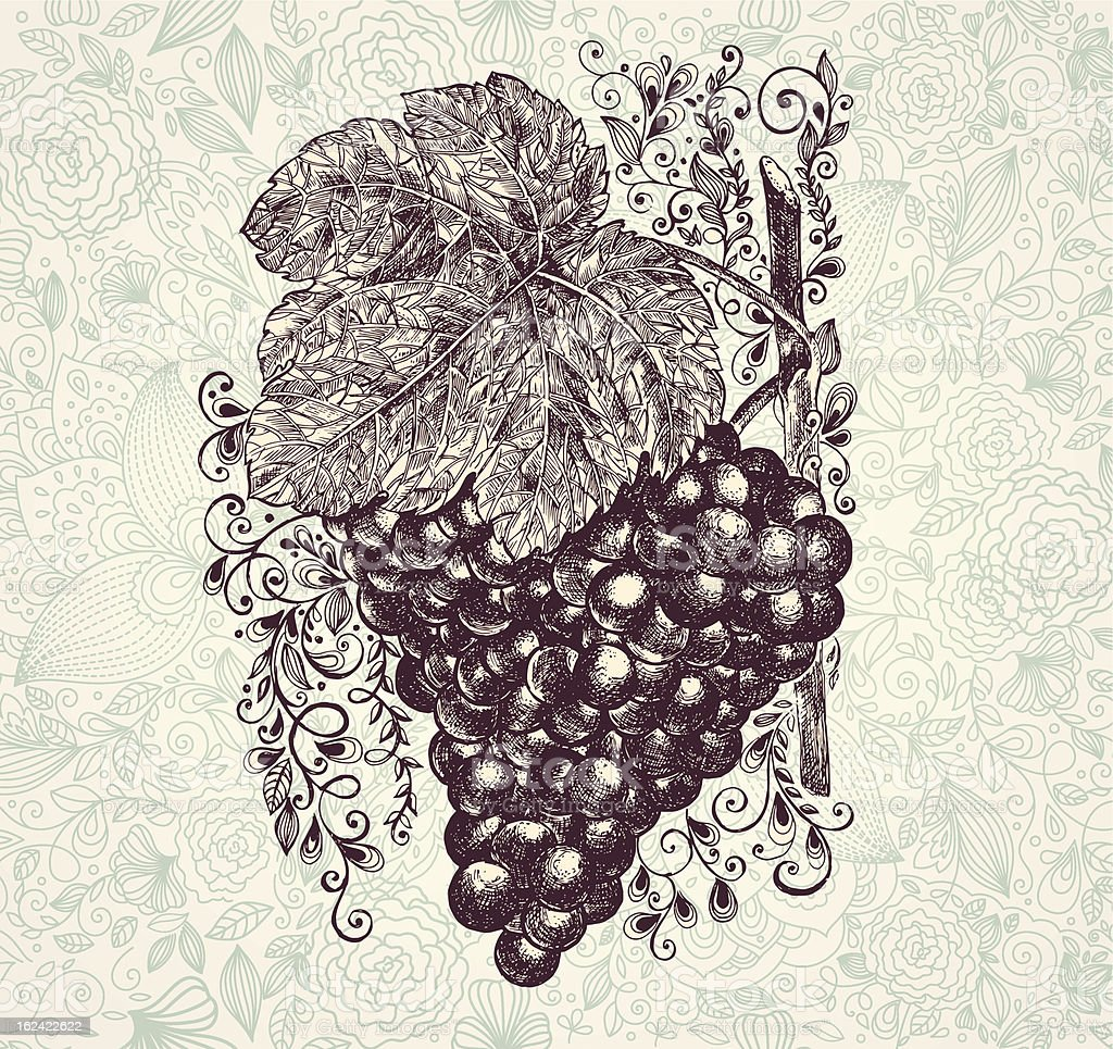 Hand drawn grape branch royalty-free hand drawn grape branch stock vector art & more images of art