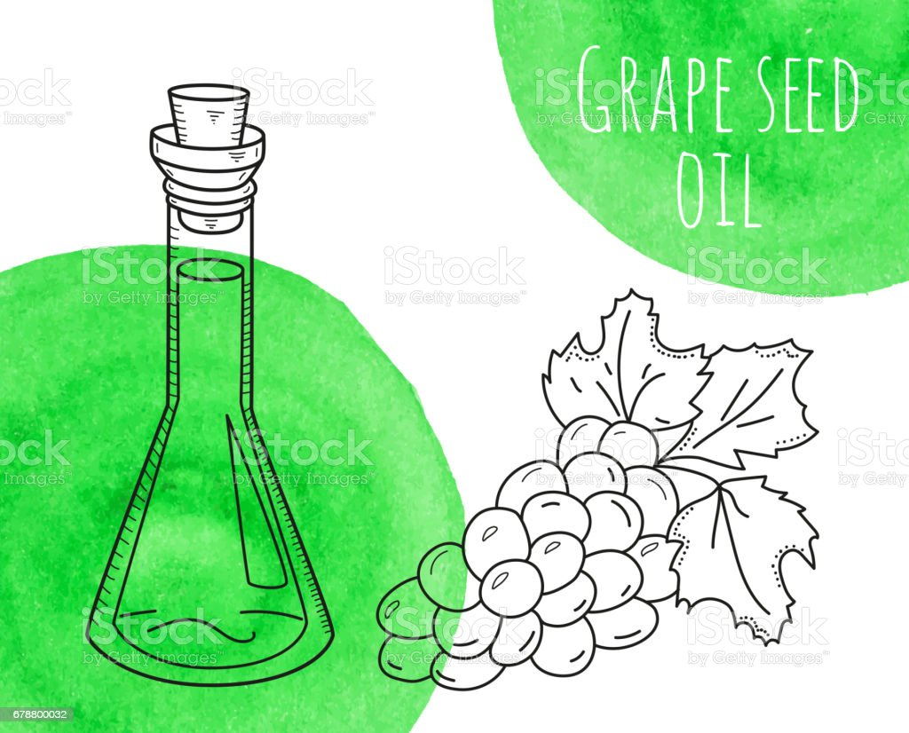 Hand drawn grape seed oil bottle with green watercolor spots vector art illustration