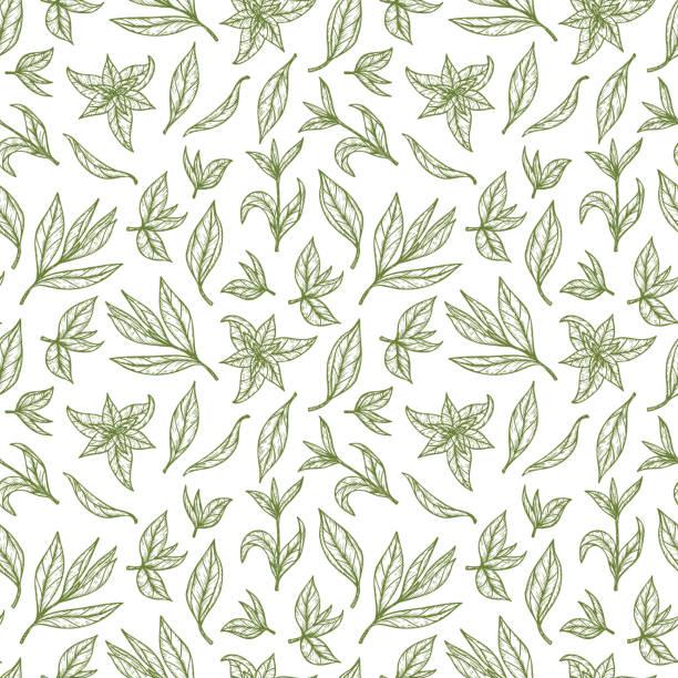 illustrazioni stock, clip art, cartoni animati e icone di tendenza di hand drawn green tea leaves seamless pattern. vector illustration - camellia sinensis