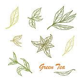 Hand drawn Green tea leaves set. Vector illustration