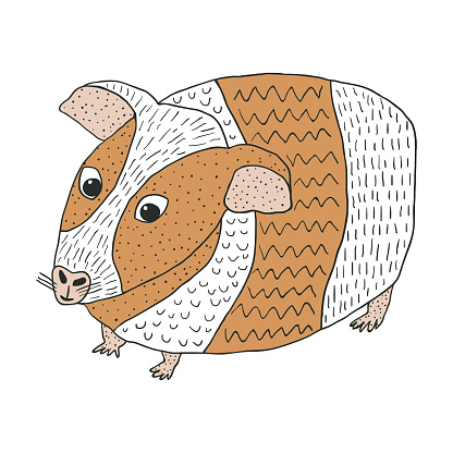 Hand drawn guinea pig. Cute little furry pet isolated on white background.