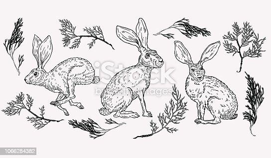 Hand drawn hare illustration with evergreen plant on background in vintage style.