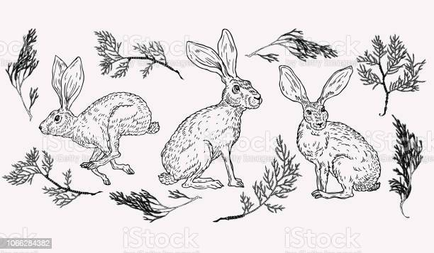 Hand drawn hare illustration with evergreen plant on background in vector id1066284382?b=1&k=6&m=1066284382&s=612x612&h=xyypistv6kpi5olbzwl1qg4i6b19aq0r0cp03n1zhyw=