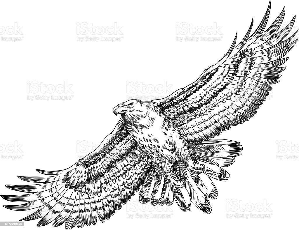 Buse main dessin e illustration vecteurs libres de - Dessin oiseau en vol ...