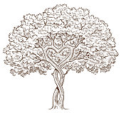 A small tree with intertwined branches and the branches forming a heart shape.