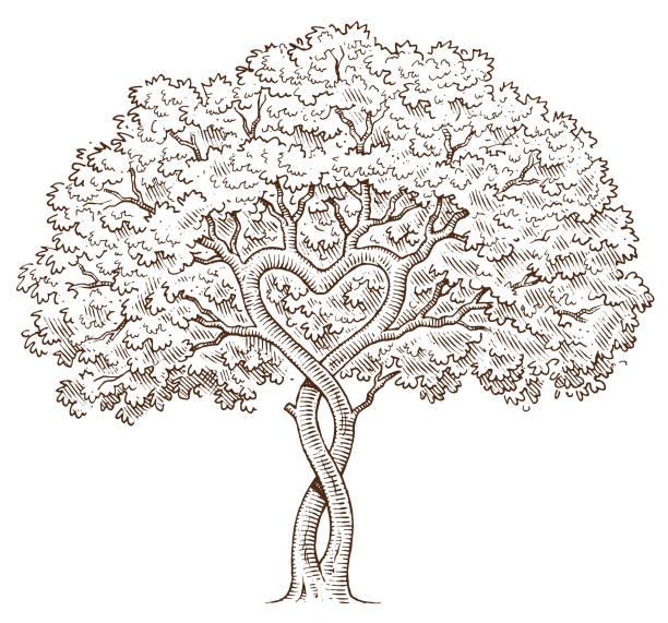hand gezeichnet herz baum - stammbäume stock-grafiken, -clipart, -cartoons und -symbole