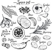 Hand drawn herbs, spices and condiments. Vector bay leaves, anise, garlic, olive oil, onion, pepper, chilli, lemon, rosemary and ginger icons. Engraved illustration Restaurant menu design packaging