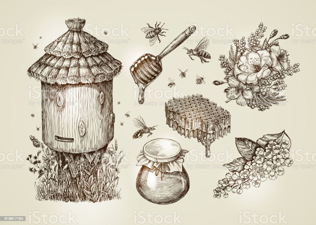 Hand drawn honey, beekeeping, bees. Collection vintage sketch vector illustration vector art illustration