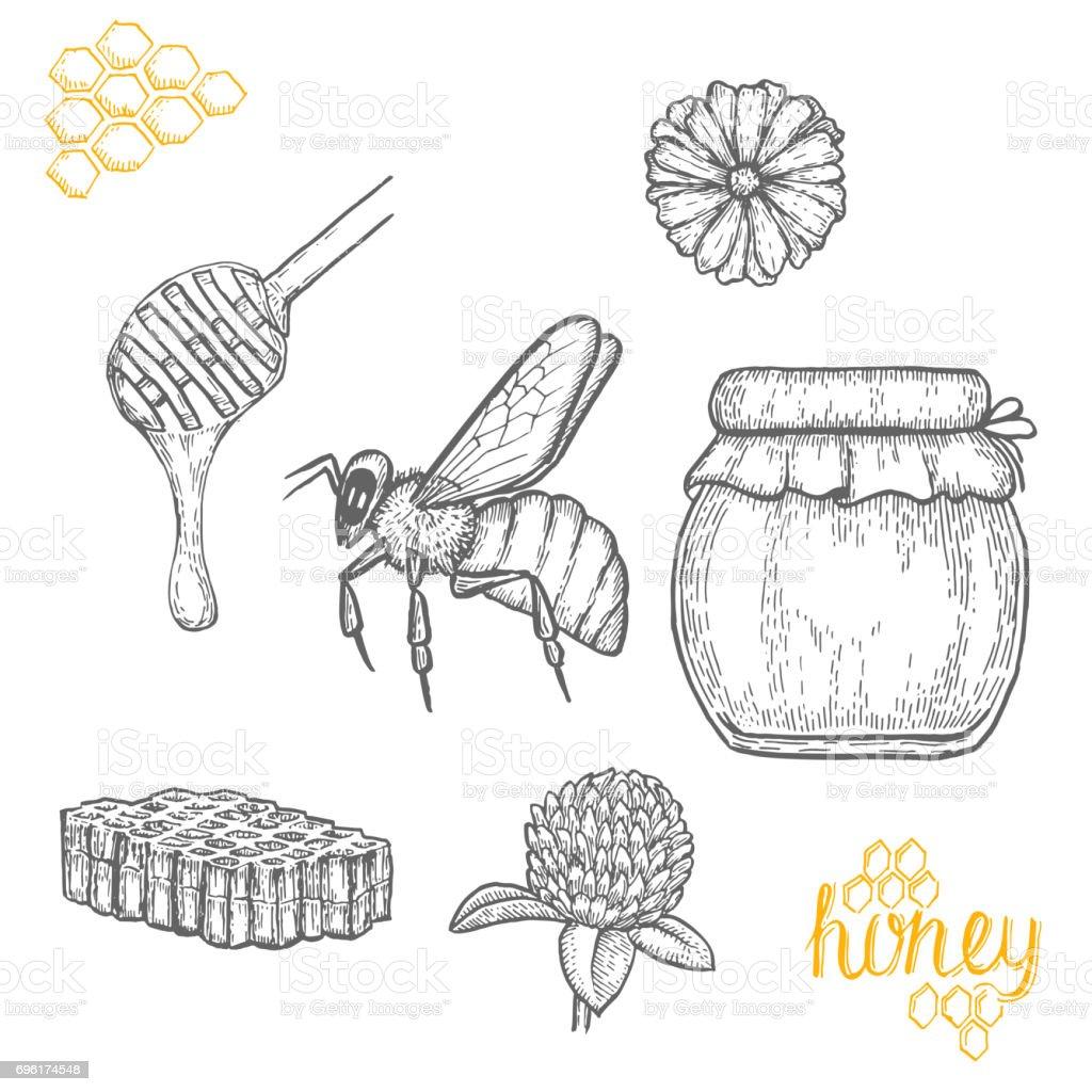 Hand drawn honey set over white background vector art illustration