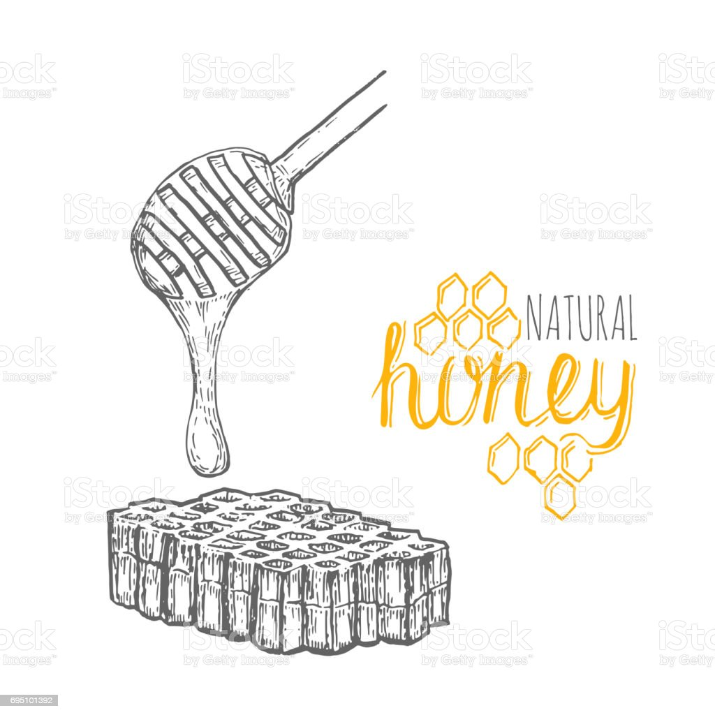 Hand drawn honey stick and honey comb over white background vector art illustration