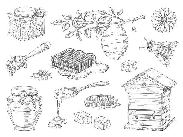 Hand drawn honey. Vintage bee honeycomb and honey jar sketch elements, doodle flowers and beeswax. Vector organic honey product Hand drawn honey. Vintage bee honeycomb and honey jar sketch elements, doodle flowers and beeswax. Vector organic sweet honey product beekeeper stock illustrations