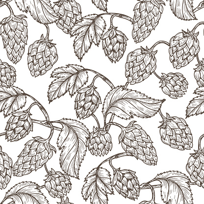 Hand drawn Hops Seamless pattern. Common hop Vector Floral background