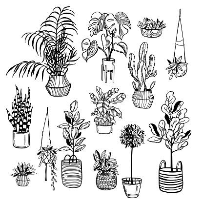 Hand drawn house plants. Vector sketch  illustration.
