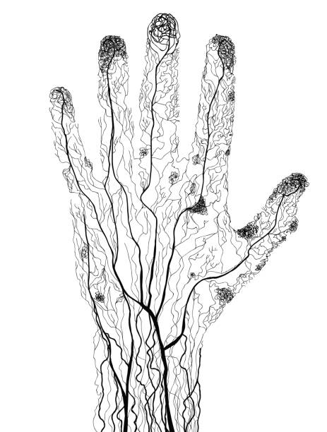 Hand drawn human hand blood vessels in silhouette vector art illustration
