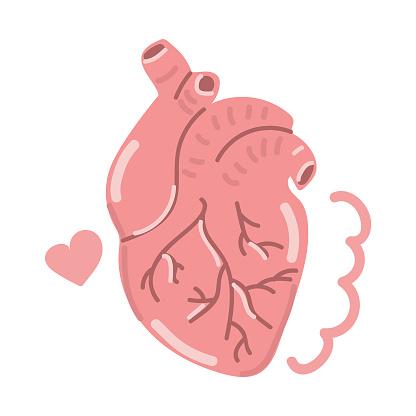 Hand drawn human heart, flat design.