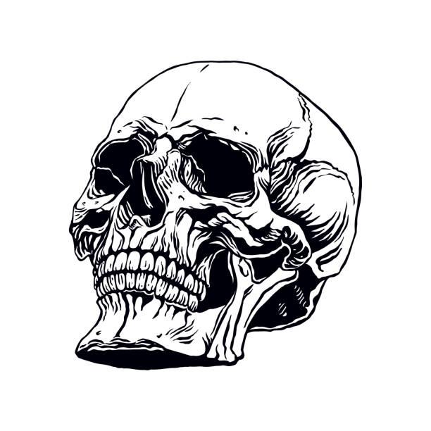 hand gezeichneten menschlichen schädel - totenkopf tattoos stock-grafiken, -clipart, -cartoons und -symbole