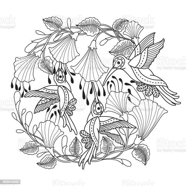 Hand drawn hummingbirds and flower for adult coloring page vector id856630680?b=1&k=6&m=856630680&s=612x612&h=xz64tkuhtj47qvdsj4h9ff 2me401gfvznmqkbl4 b4=