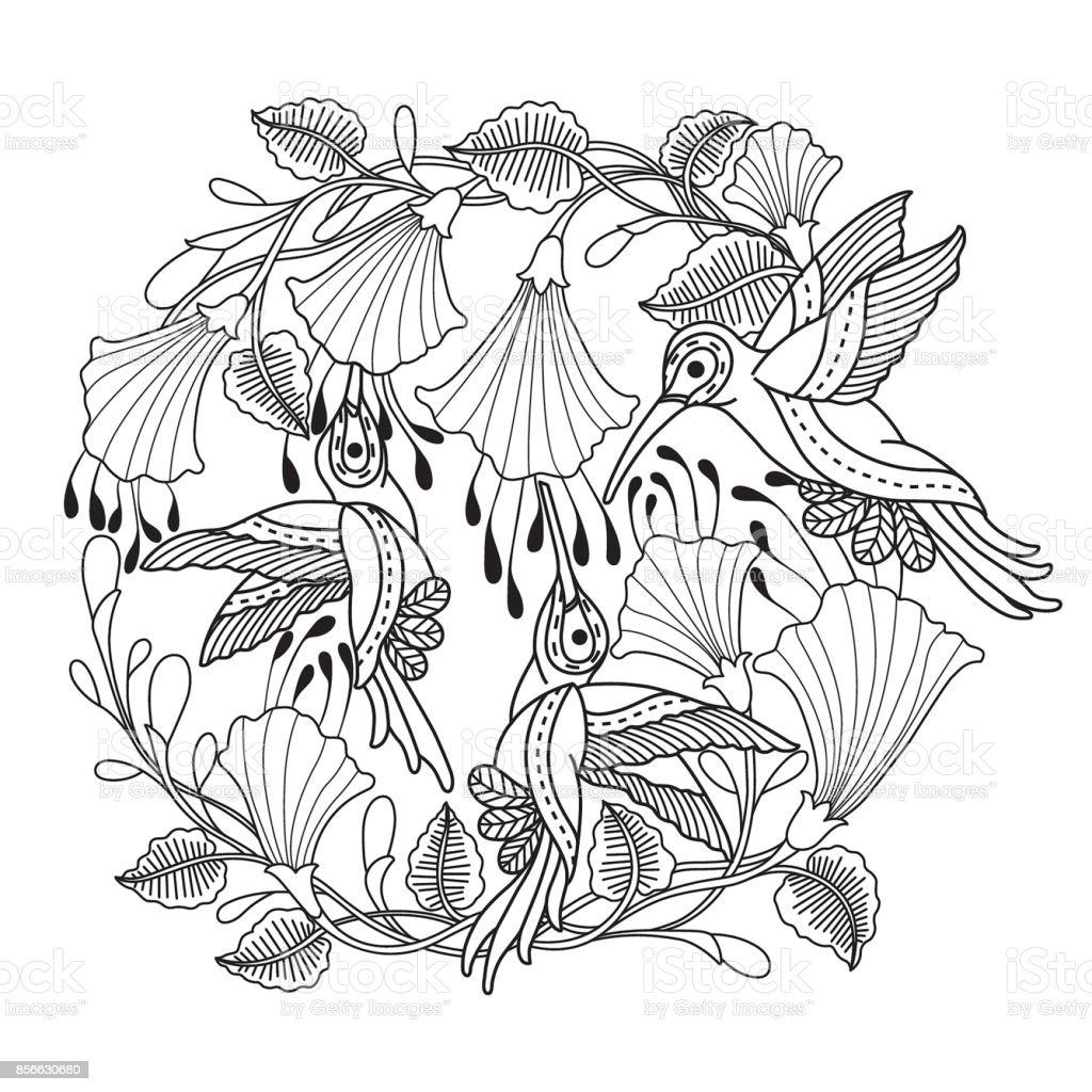 Hand gezeichnet Kolibris und für Erwachsene Malvorlagen Blume. – Vektorgrafik