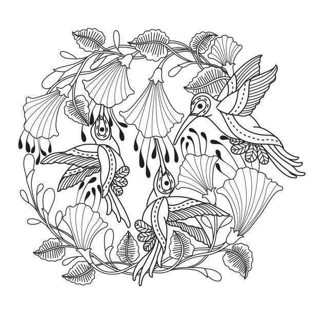 Hand drawn hummingbirds and flower for adult coloring page. vector art illustration