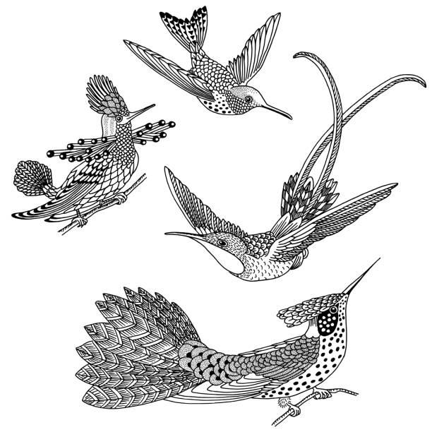 Hand drawn hummingbirds vector art illustration