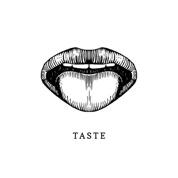 hand drawn icon of human sense of taste in engraved style. vector illustration of mouth and tongue - język otwór gębowy stock illustrations