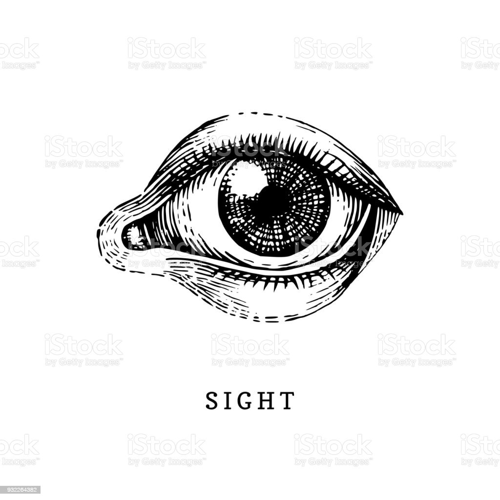 Hand drawn icon of human Sight sense in engraved style. Vector illustration of mans Eye hand drawn icon of human sight sense in engraved style vector illustration of mans eye - immagini vettoriali stock e altre immagini di anatomia umana royalty-free
