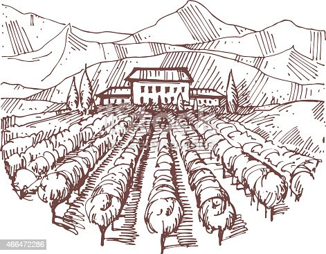 Hand drawn illustration of a vineyard