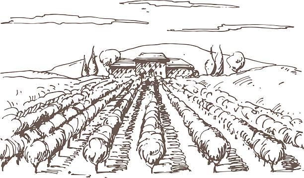 hand gezeichnete illustrationen von einem weingut - herbstgemüseanbau stock-grafiken, -clipart, -cartoons und -symbole