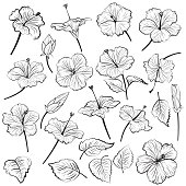 Hand Drawn Illustration Of Hibiscus Flowers