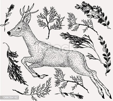Hand drawn illustration of jumping deer in vintage style with evergreen branches on background. Retro styled template for greeting design.