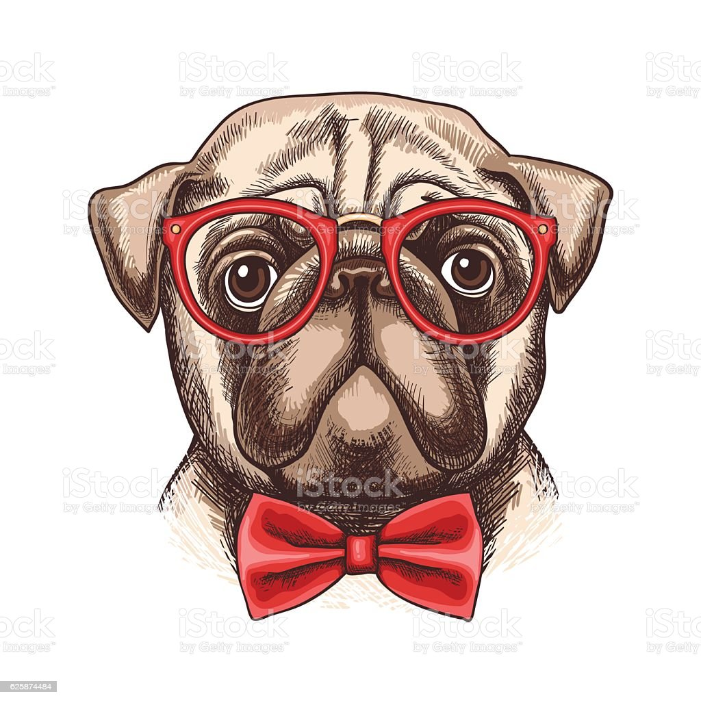 Hand drawn illustration of pug in glasses and bow tie vector art illustration