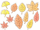 This is an illustration set of autumn leaves drawn with hand-drawn lines and colored pencil style paint (paper texture). The types of leaves are Ginkgo, Japanese maple, Mizunara, Zelkova, Kunugi, Yoshino cherry, and Platanus.