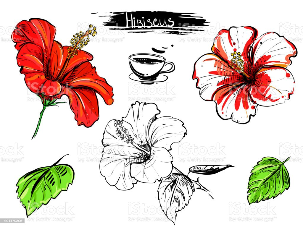 Hand Drawn Illustration Set Of Color Hibiscus Flowers Branch Leaf ...