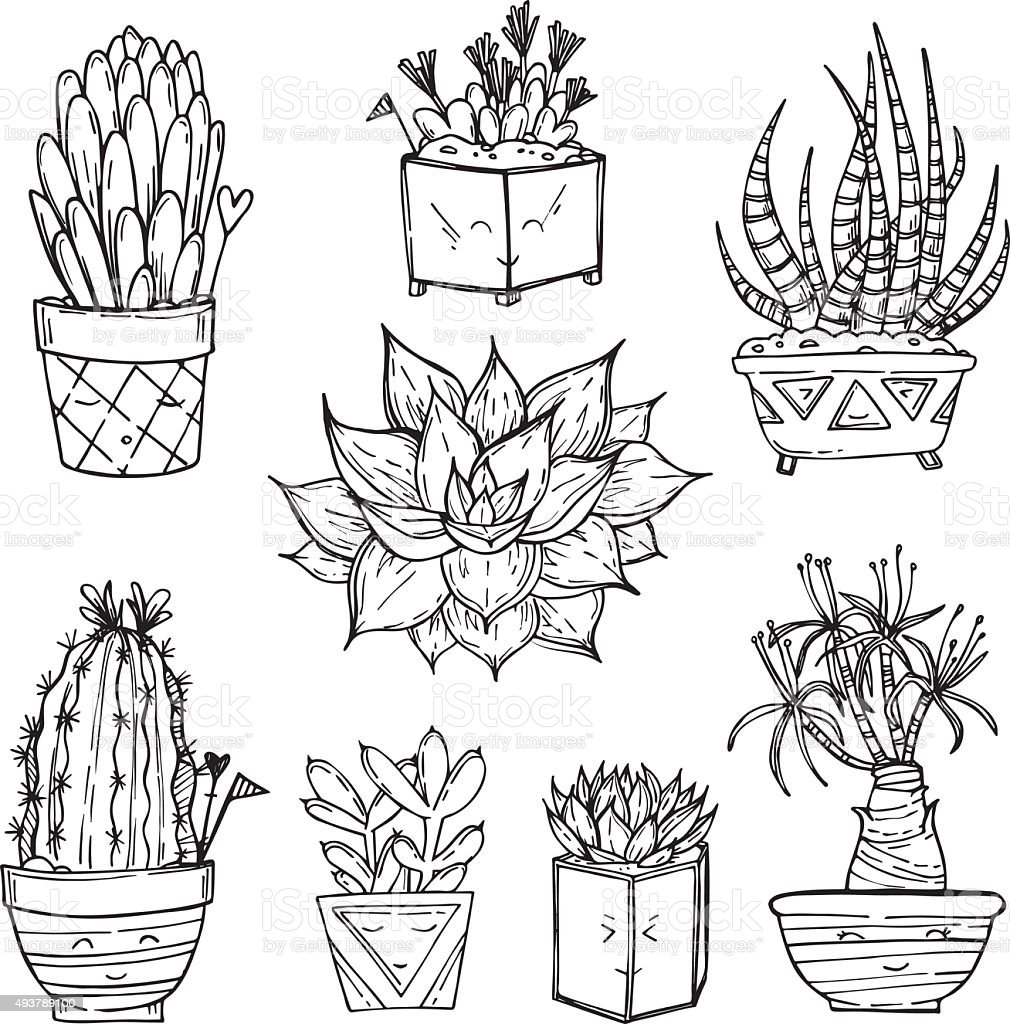 Hand drawn illustration - Set of cute cactus and succulents. vector art illustration