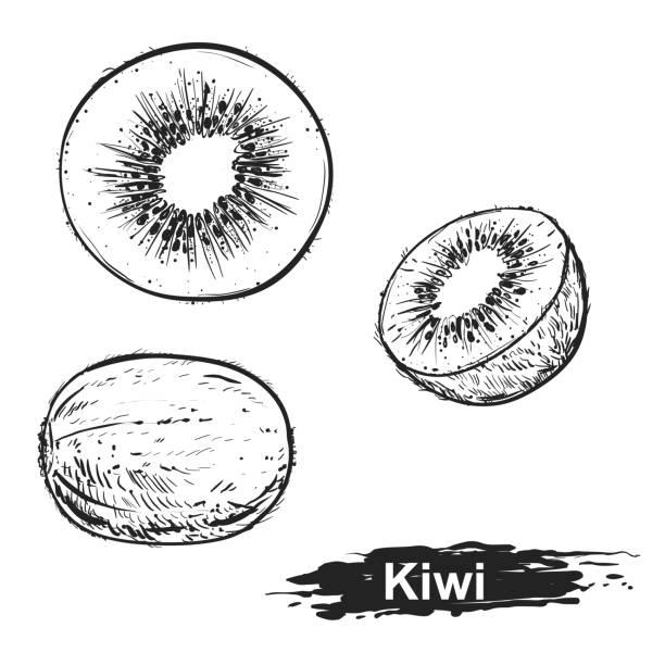 bildbanksillustrationer, clip art samt tecknat material och ikoner med handritad illustration uppsättning monokrom kiwi. skiss. vektor eps 8 - kivik