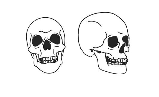 Hand drawn illustration skull.Vector art drawing