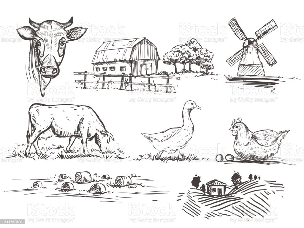 Die Hand Gezeichnete Abbildung Mil Und Bauernhof Mit Kuh Stock ...