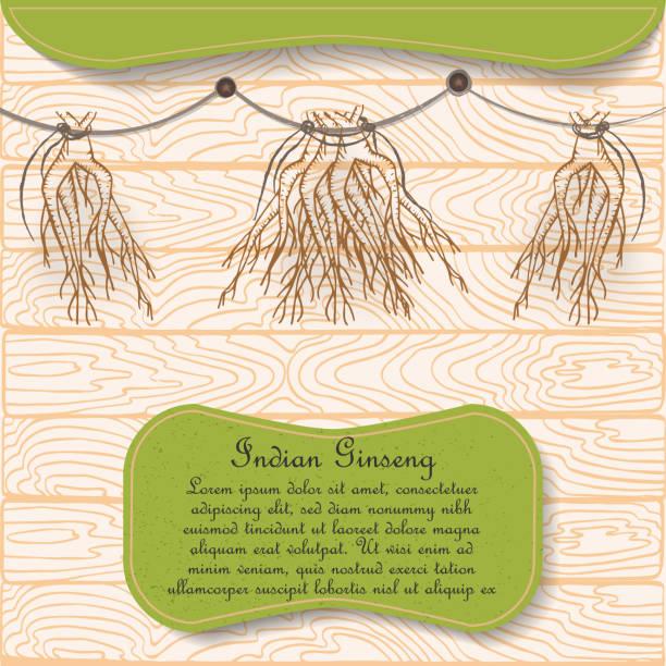 hand gezeichnet indische ginseng wurzeln hung zum trocknen - schlafbeere stock-grafiken, -clipart, -cartoons und -symbole