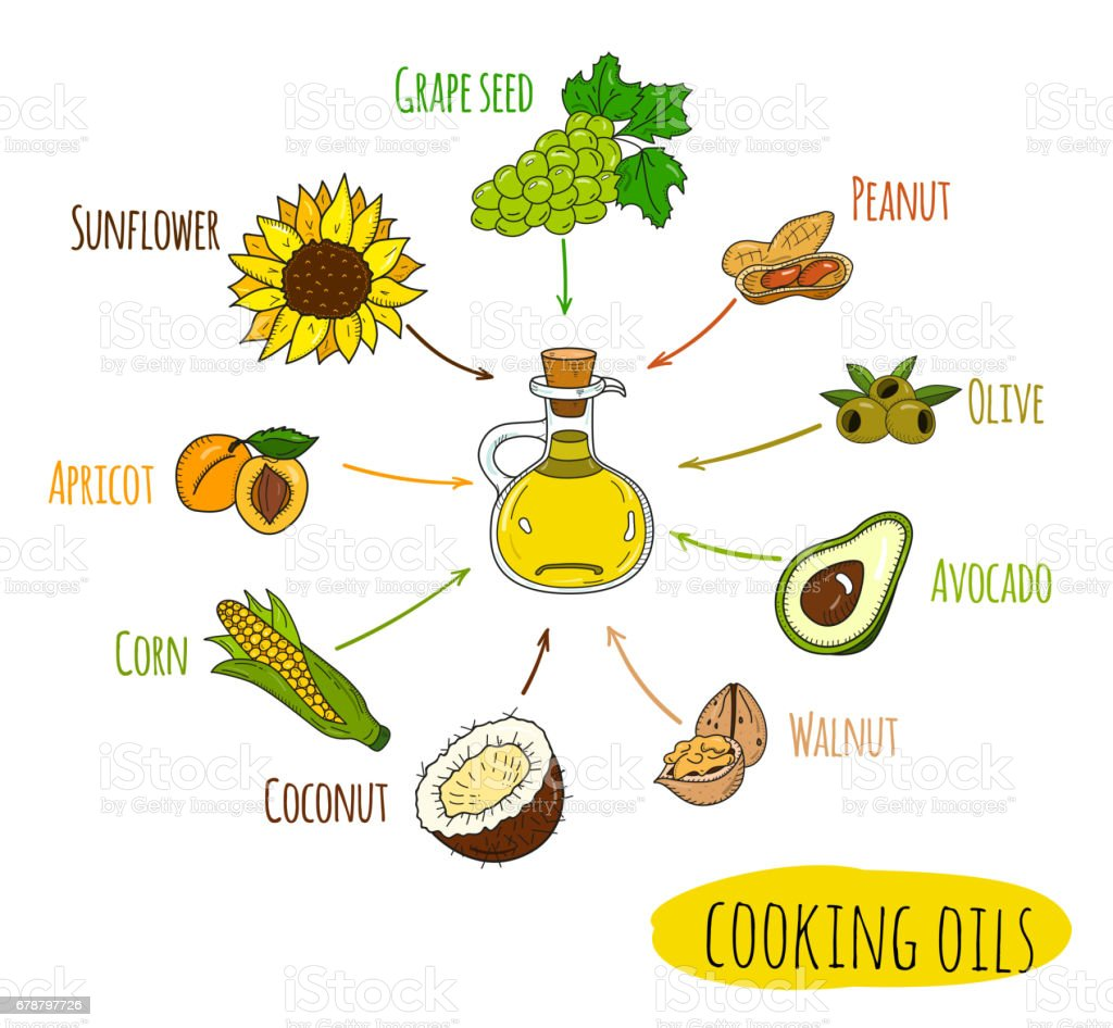 Hand drawn infographic of cooking oil sorts vector art illustration